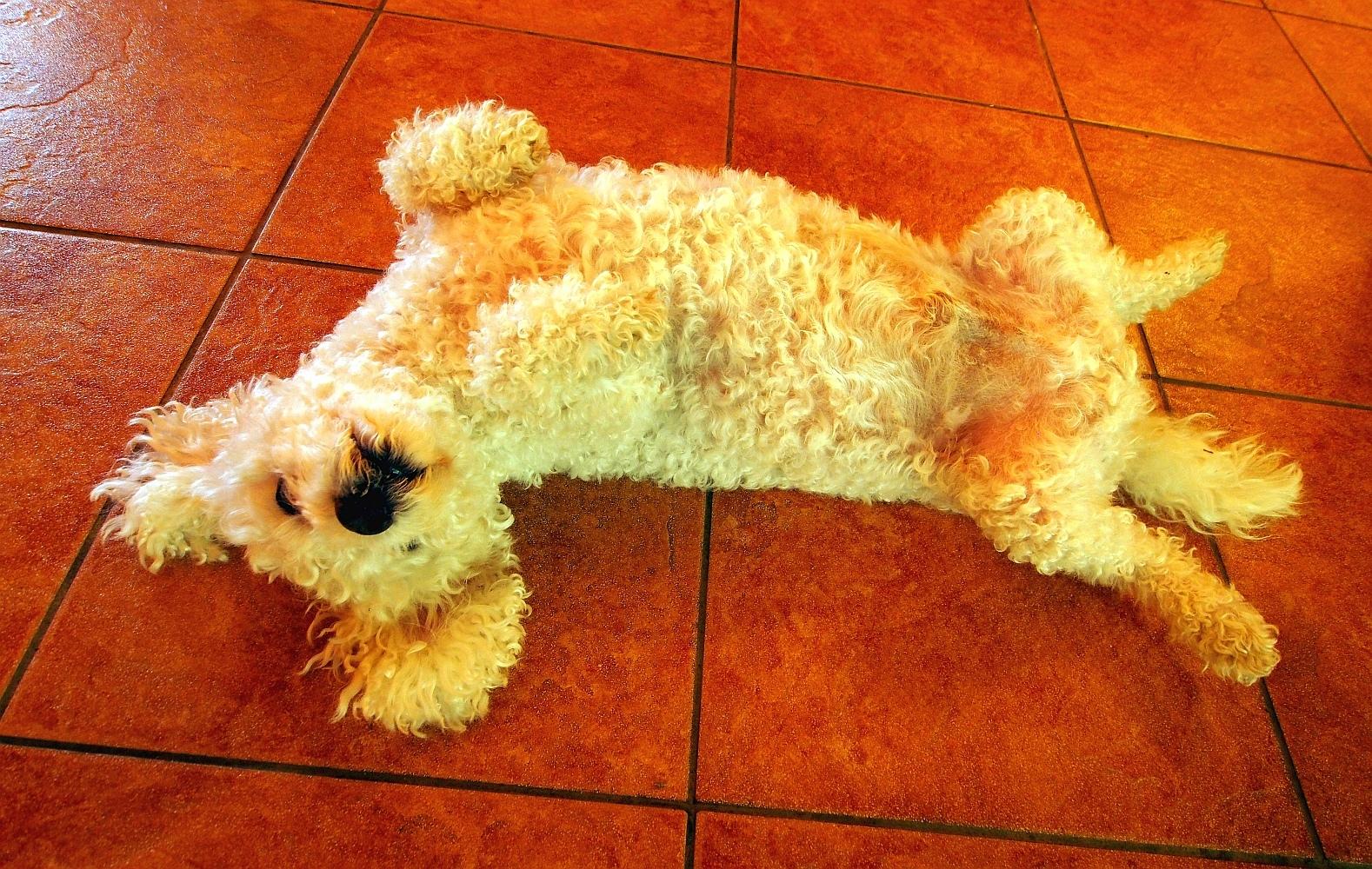 Henry der Wirtshaushund